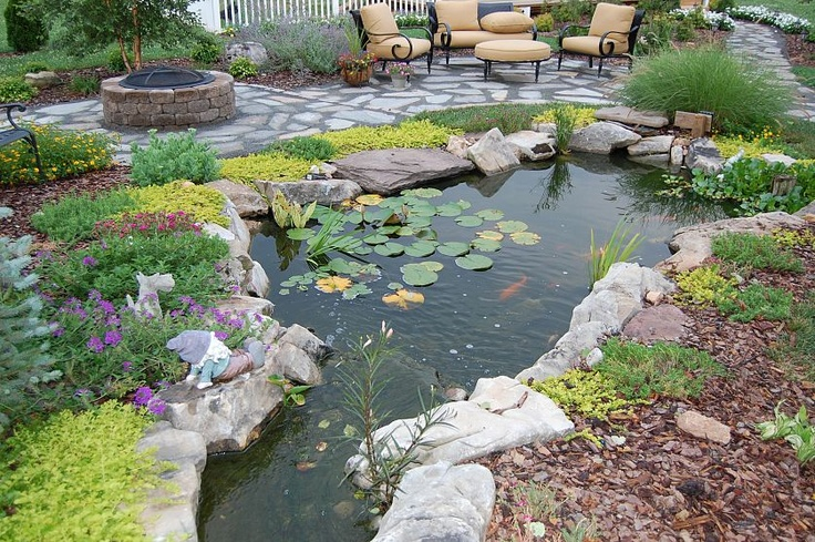 Gorgeous backyard pond complete with fish and plants.