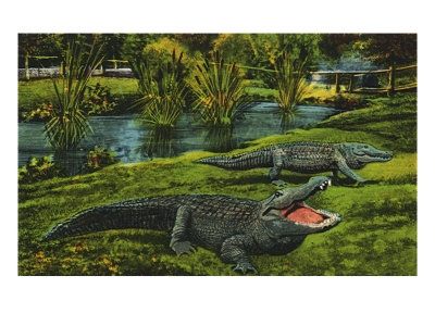 Alligator study reveals insight into dinosaur hearing ...