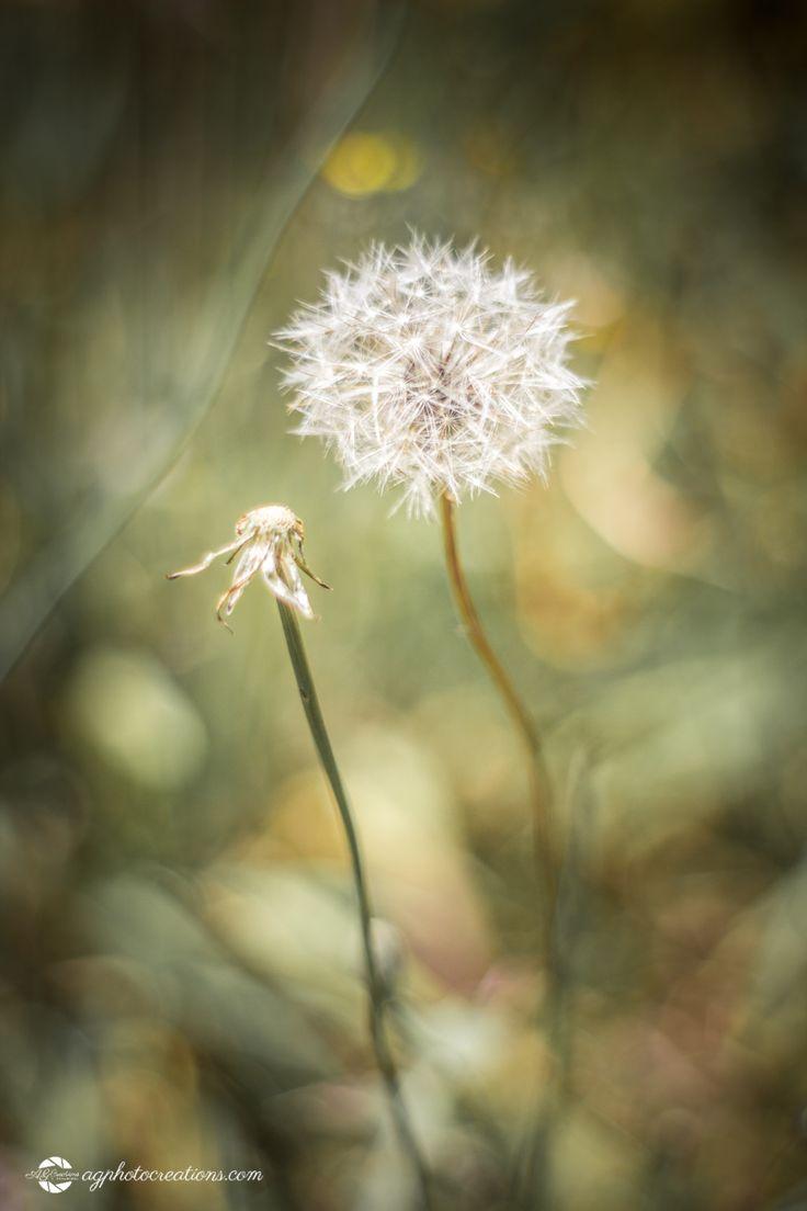 Rework52-38 Make a Wish
