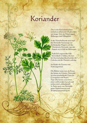 Koriander http://www.kraeuter-verzeichnis.de/                                                                                                                                                     Mehr