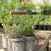 Herb Garden on the Balcony | eHow