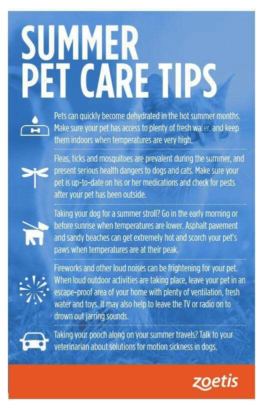 9 best Importance of Pet Microchips images on Pinterest Your pet - lost pet poster