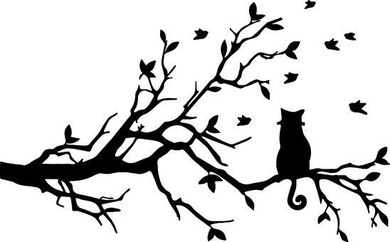 Cat, Félin, Des Animaux
