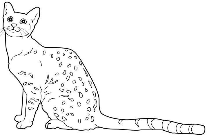 бенгальский кот картинки раскраски настоящий