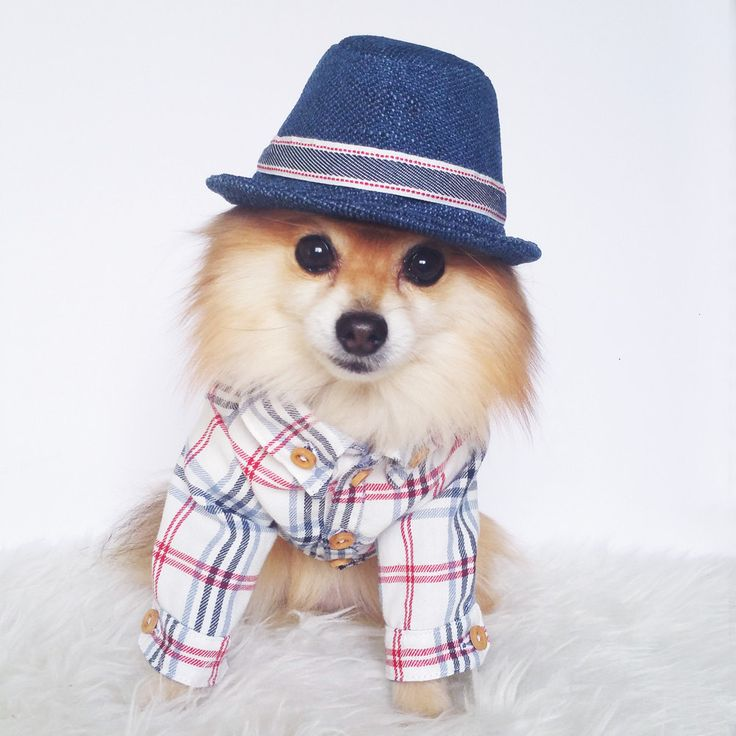 Dog Check Shirt, puppy dress shirt, dog wedding suit, tuxedo for dogs, formal dog clothes, dog shirts, dog clothes, dog hoodie, ring bearer by puppydoggyclothes on Etsy