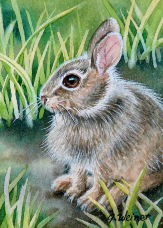 ACEO Limited Edition Print Baby Bunny by J. Weiner, via Etsy.