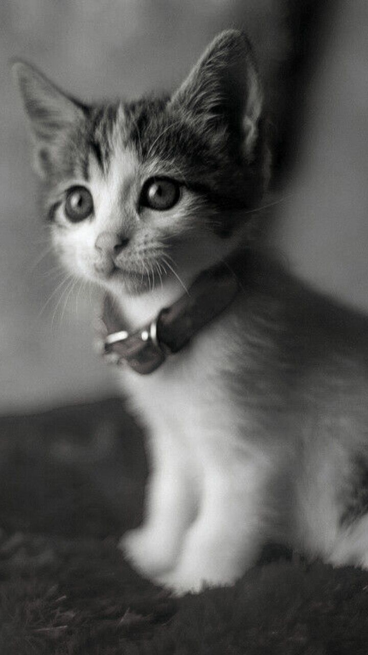 Pin By Biia Schreave On Kittens In 2020 Cute Cats Beautiful Cats Cute Cats And Kittens