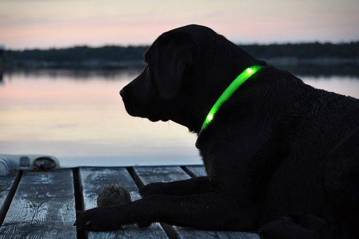 Fantastic Idea... Glowdoggie LED Dog Collars
