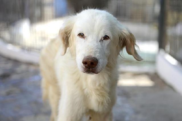 PZ - Adopção de Cão - Cão Rafeiro - Apolónio - 9 anos -acolhido(a) por União Zoófila