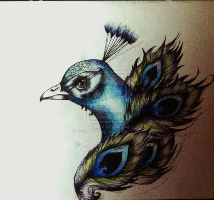 Peacock Drawing Tattoo | peacock tattoo idea by meetthecreeperr traditional art drawings ...