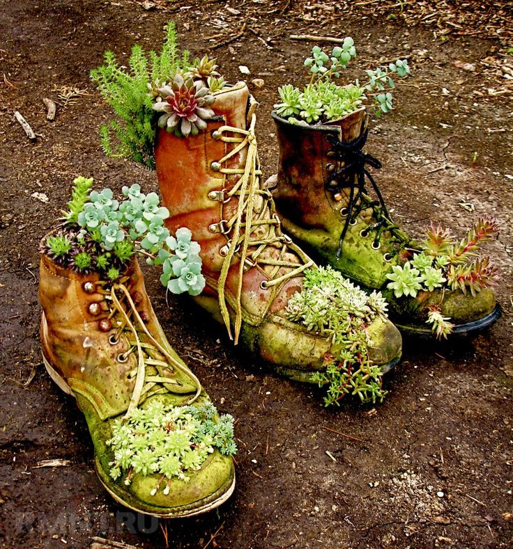 картинки цветы в ботинках такое тай-бо