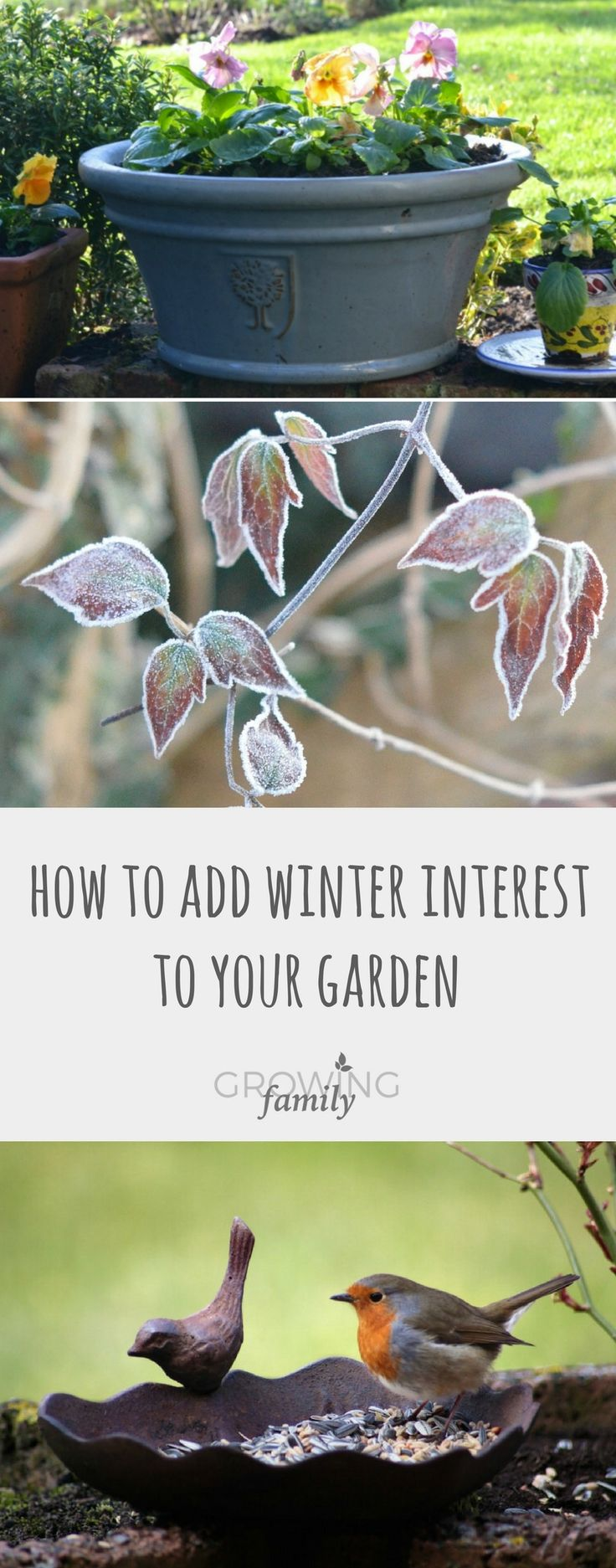 Low-effort tips and ideas for enhancing your winter garden. Easy ways to provide maximum interest during the colder months!