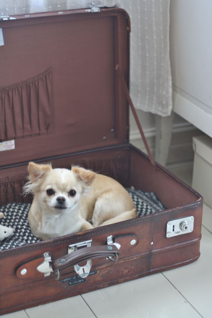 Dog bed made out of an old suitcase