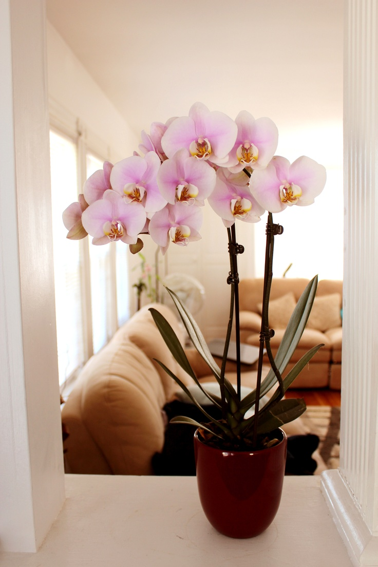 my pretty pink orchid by yi you mei: day orchid decor