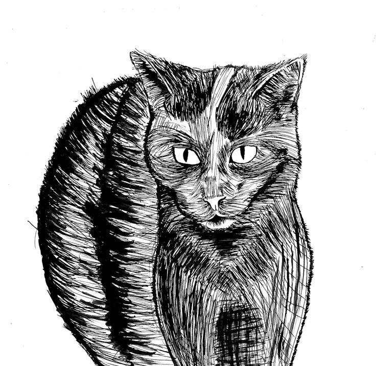 My illustrative cat