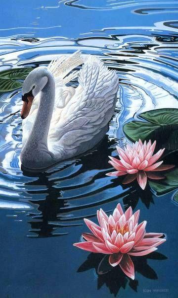 Лебеди                                                                                                                                                                                 More