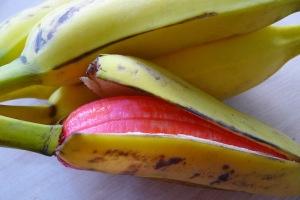 Strange Fruit | Low Commitment Project