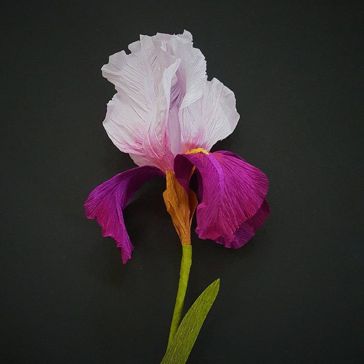 Iris redux.  Perpetually flummoxed by the 'how to' on this particular flower! #iris #crepepaper #purple #paperproblems