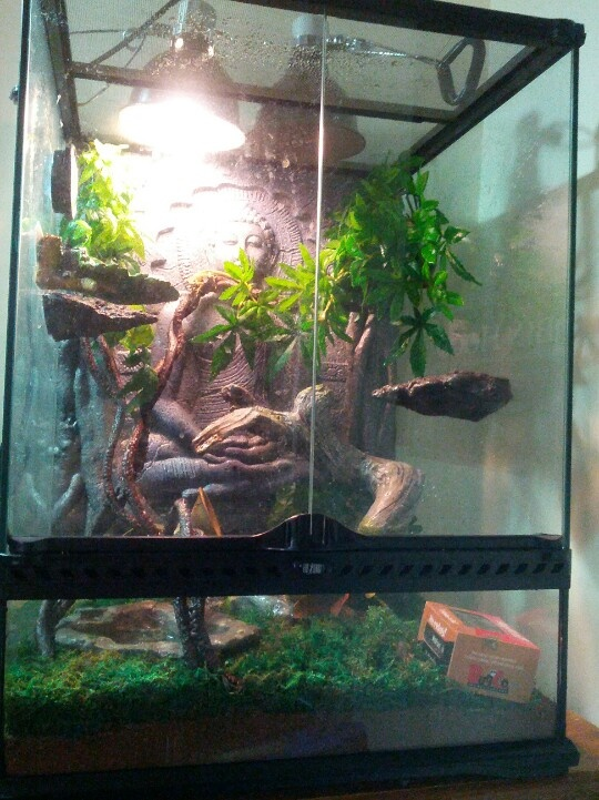 Anole And Tree Frog Images amp Pictures Becuo