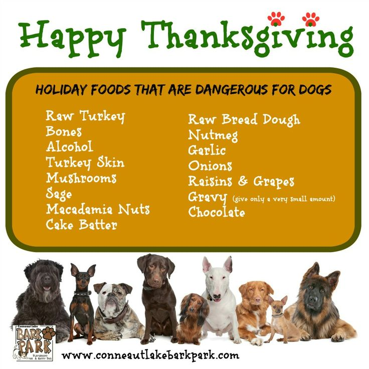 Keep your dog safe during the holiday.  A list of off limits food for dogs.