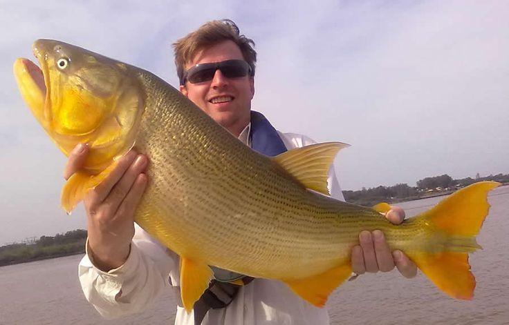 Laos Fish | hrs de pescaria, muito dourado gente. Vale a pena conferir. 12 ...