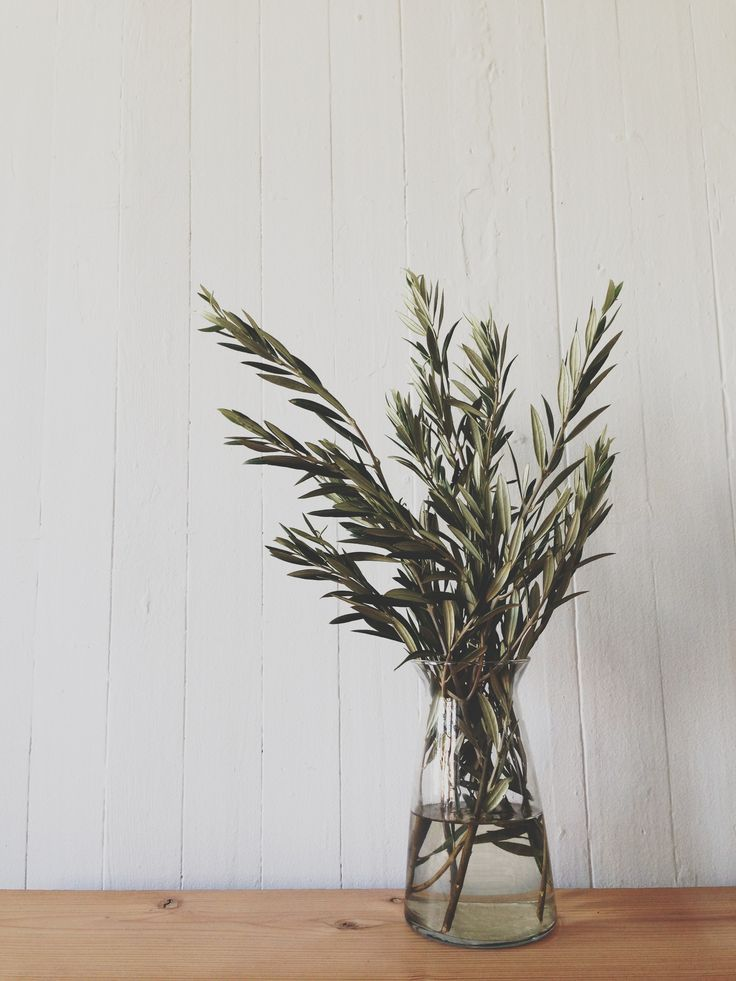 olive branches -- green only centerpieces