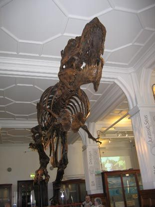 Tyrannosaurus rex - A Mounted Skeleton up for Auction