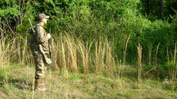 Five key habitat components to maintain turkey population | Outdoor Channel