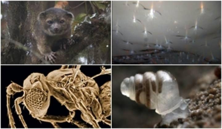 El 'Top ten' de las nuevas especies descubiertas