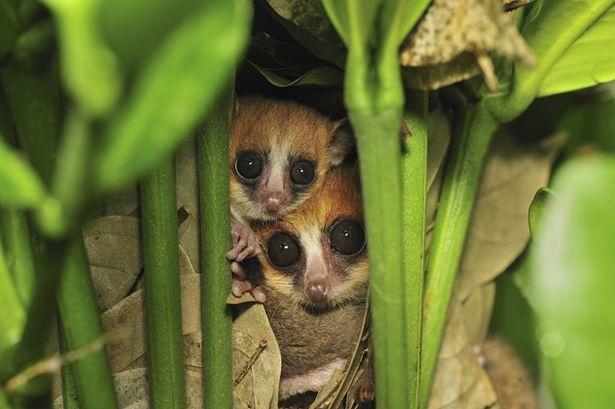 La top ten dei nuovi mammiferi scoperti negli ultimi 10 anni