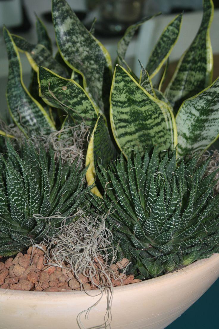 mini jardim de cactus:Composição em cerâmica de Dulce Cardoso, Mini espadas de Ogum e