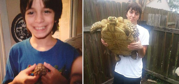 Sulcata affter 17 yr // How lovely see people that take the compromise with a Sulcata and don't throw it away as soon as it grows big <3  // pets-before-after