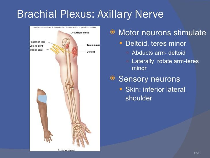 numb hands | Axillary nerve injury shoulder dislocation