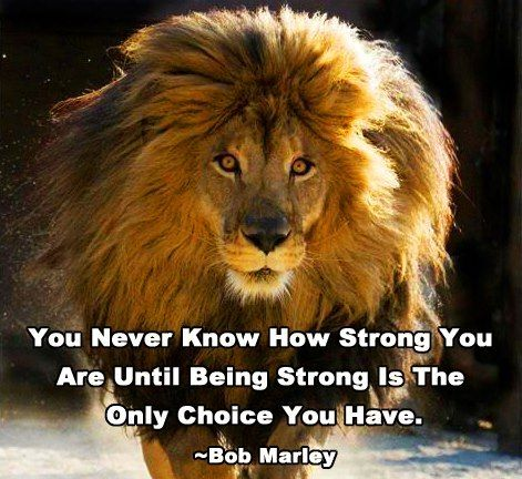 King and queen lion quotes