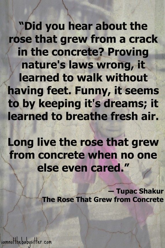 Tupac Quote - The Rose That Grew From Concrete.