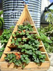 I'm planning to plant strawberries soon, and there are some great ideas here!