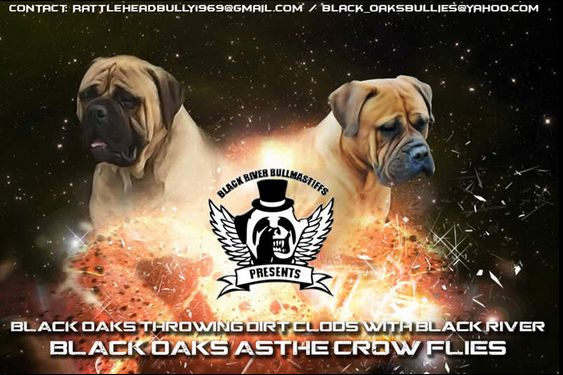 Find the Bullmastiff  Breeder and Bullmastiff Puppy from world's No.1 seller Black River Bullmastiffs, In which you can find large dogs and puppies with proper training  at an affordable price rate, For more info call at 405- 923-3843.