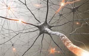 Mózg bywa skwaszony   Aktualności o polskiej nauce, badaniach, wydarzeniach, polskich uczelniach i instytutach badawczych