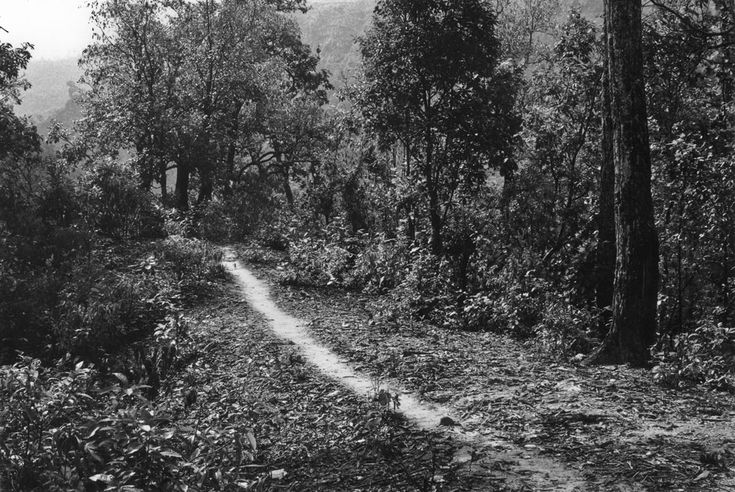 Land Artist Richard Long, 'Brushed Path, a line in Nepal' from a 21 day footpath walk in 1983.
