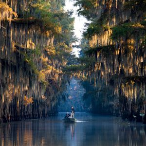 Caddo Lake, Texas and Louisiana < The Best Lakes Across the South - Southern Living Mobile