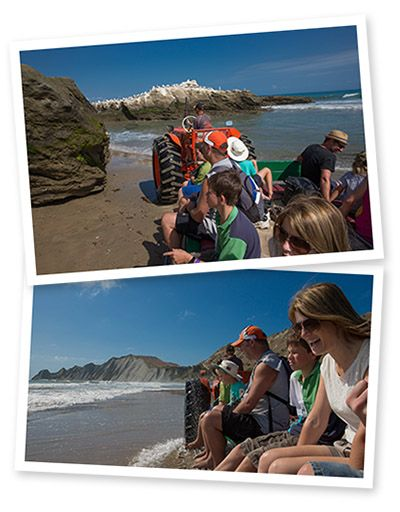 Taking tourists on a tractor ride to Cape Kidnappers