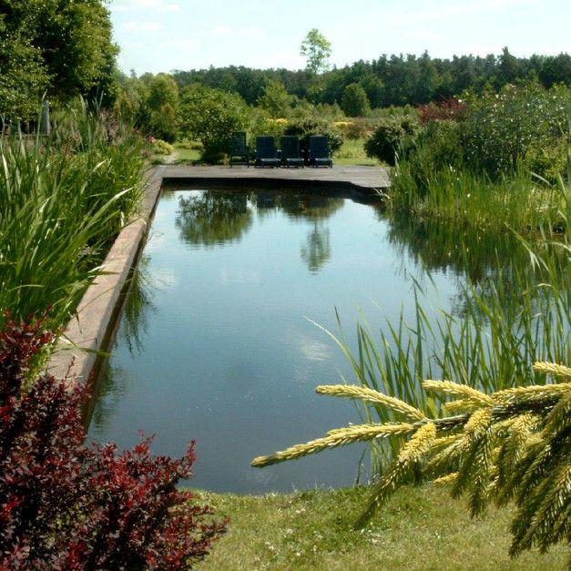 Właściciele ogromnych działek mogą sobie również pozwolić na staw kąpielowy wpisany w przestrzeń ogrodu. Fot. Pracownia Sztuki Ogrodowej
