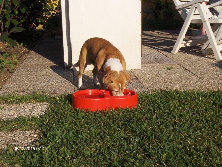 Pinco e Ciotola Eureka anti formiche per cani e gatti