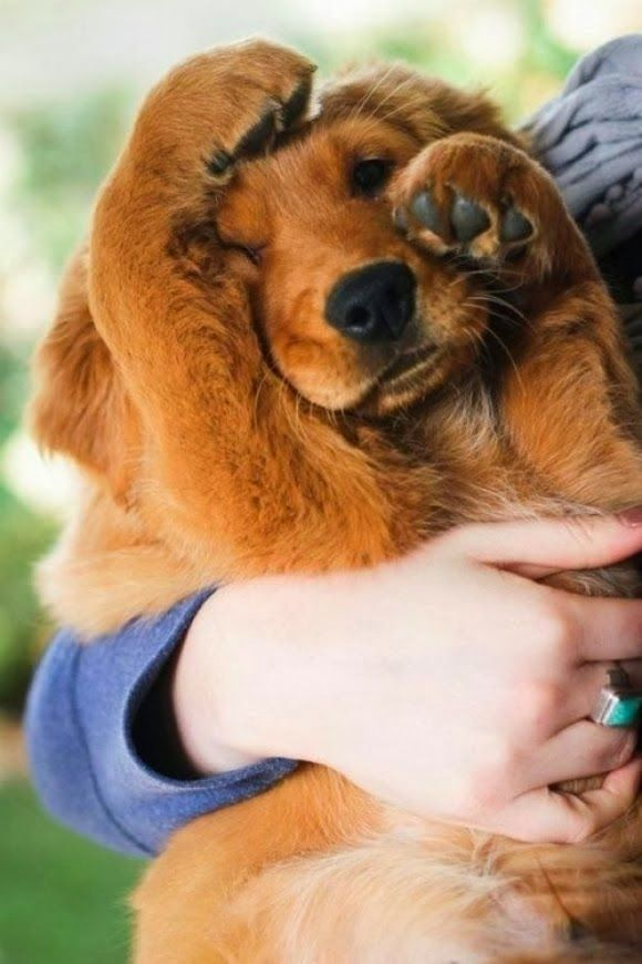 8 Signs That Your #Dog Actually Loves You