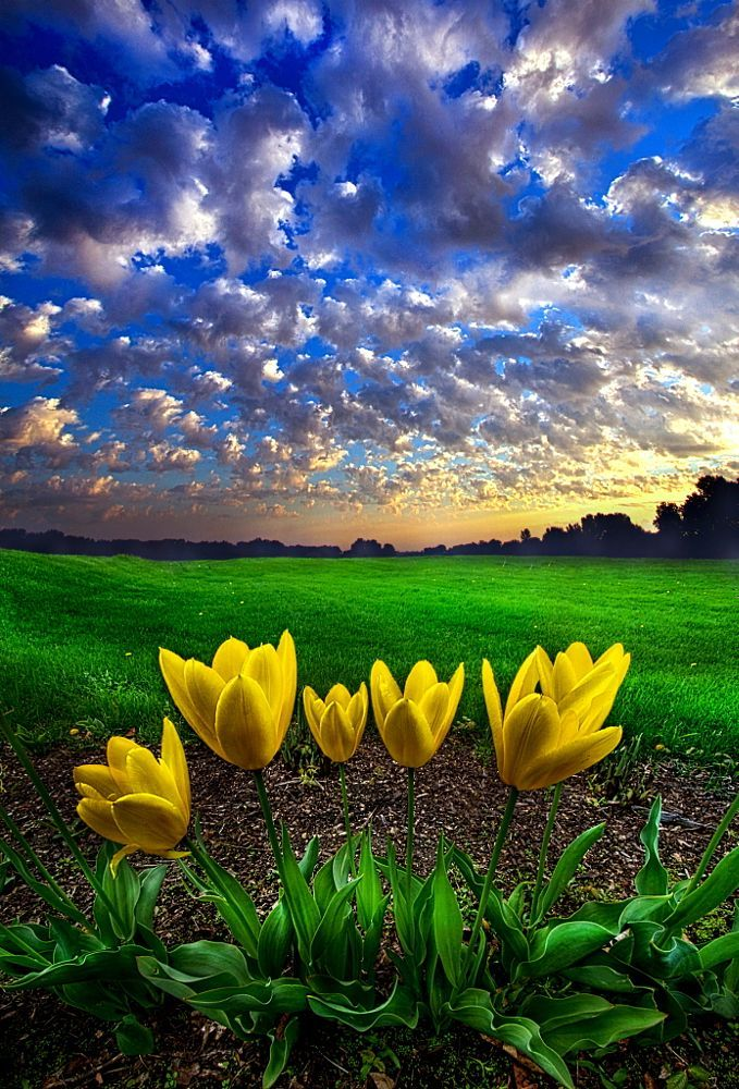What Kind of World do You Want by Phil Koch on 500px