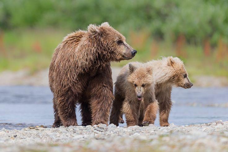 Alaskan Brown Bear by Uriarte via http://ift.tt/2dE3YhQ