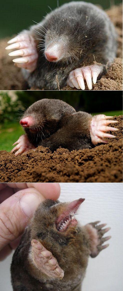 Alternative Gardning: How to get rid of Moles
