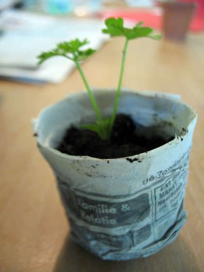 Newspaper Plant Pot That Sets Stiff.  (Also works with toilet paper.): Plants Can, Gardens Ideas, Newspaper Plants, Ingenius Newspaperpl, Newspaper Seedl, Seedl Pots, Diy Newspaper, Newspaperpl Pots, Paper Cups