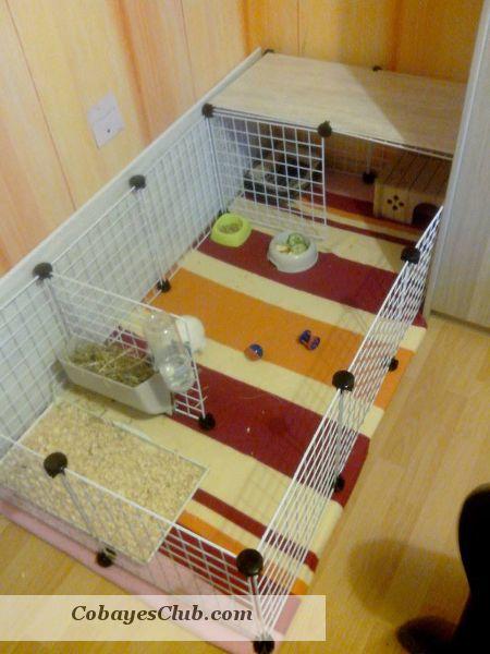 cavy cage cochon d'inde                                                                                                                                                                                 Plus