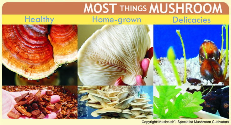 New listing on the KZN Midlands Green Map - MushRush | Specialist Mushroom Cultivars
